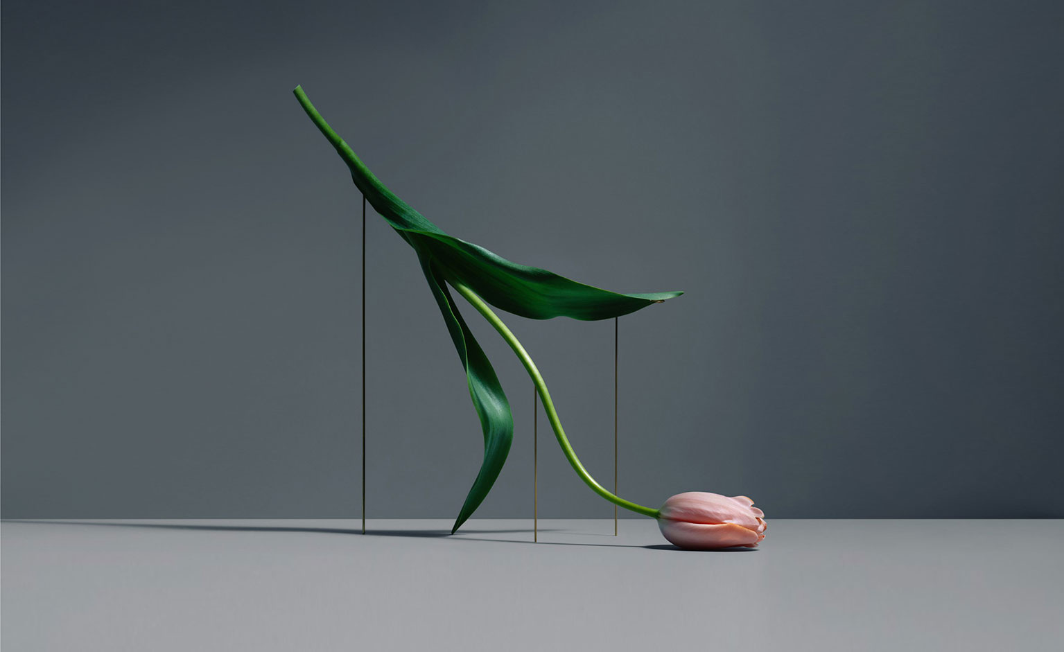 Artists that inspire us – Carl Kleiner